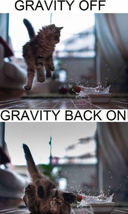 friday-cat-gravity