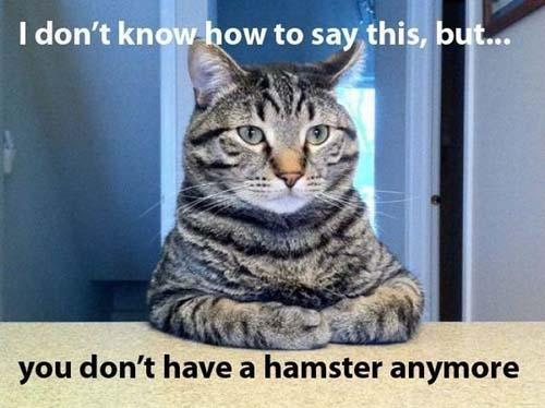 friday-cat-hamster