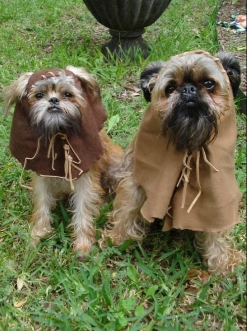 friday-star-wars-dogs