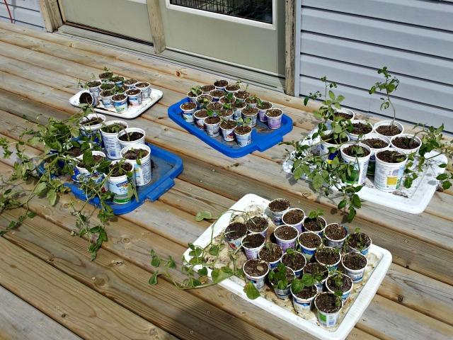 mimm-plants