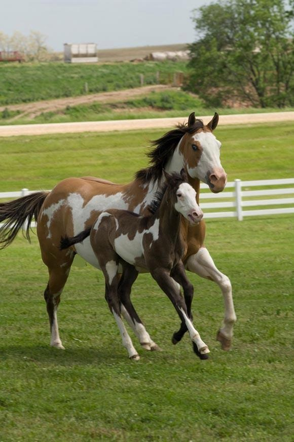 mom-beautiful-horses