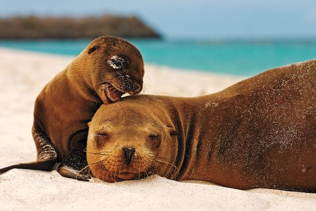 mom-calm-seals