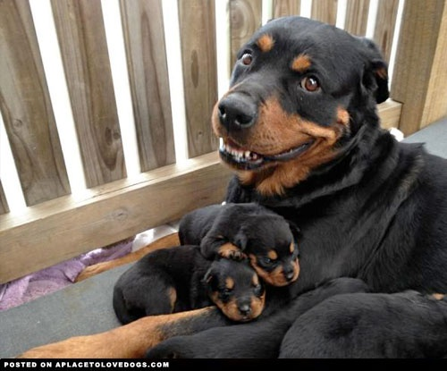 mom-proud-puppy