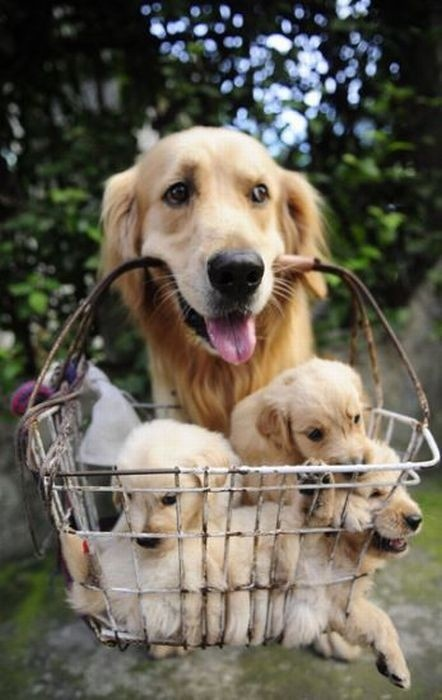mom-resourceful-puppy