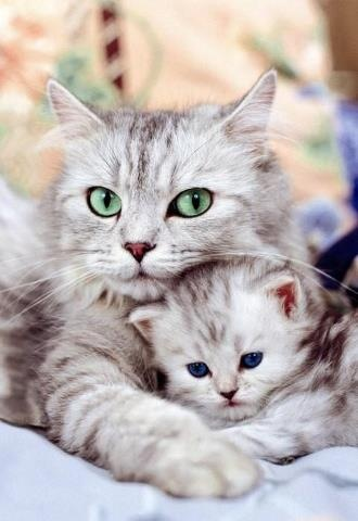 mom-watchful-kitten