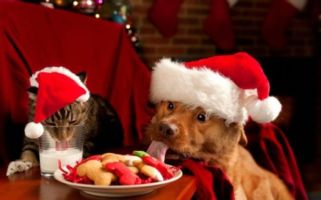 christmas-cat-and-dog-580x362