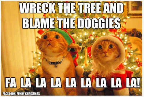 thurs-thoughts-christmas-tree-cats
