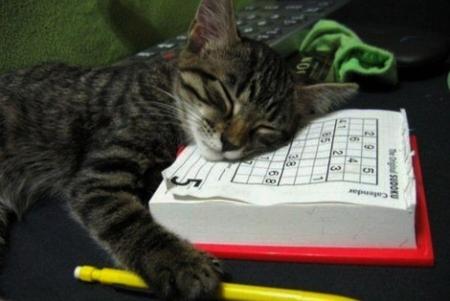 tol-cat